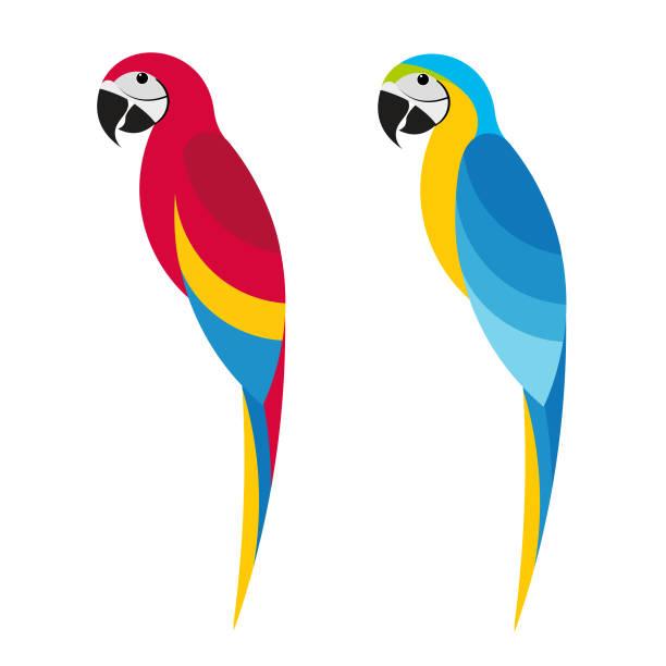 ilustrações de stock, clip art, desenhos animados e ícones de macaw 4 - arara