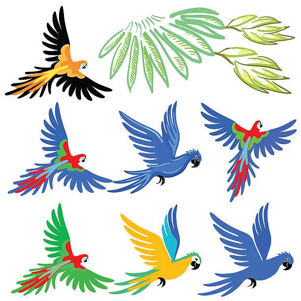 ilustrações de stock, clip art, desenhos animados e ícones de arara papagaio conjunto de padrão - arara