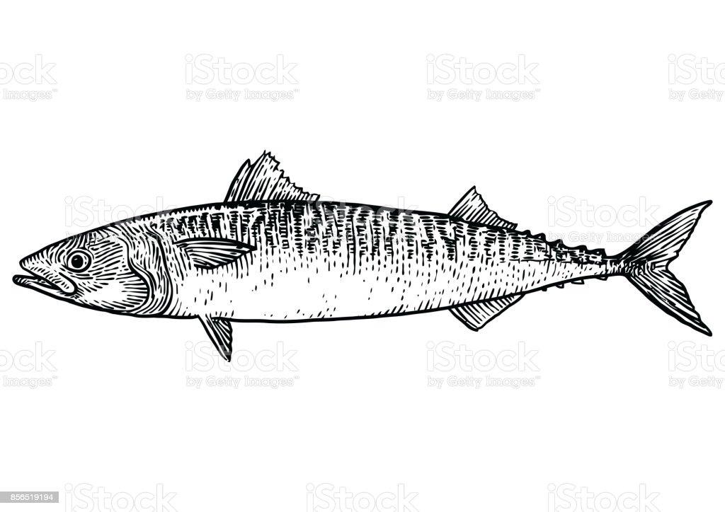 Vetores De Ilustracao De Peixe Cavala Desenho Gravura Arte De