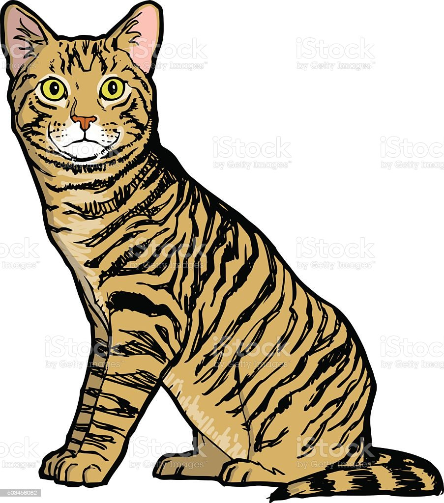 mackerel tabby cat vector art illustration