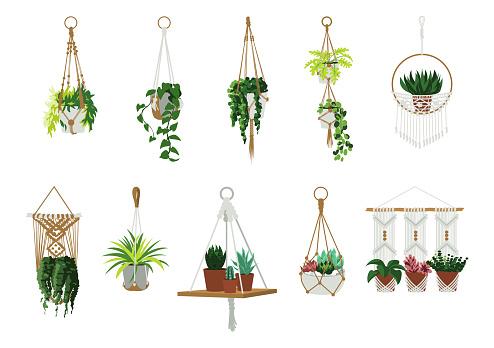 Macrame hangers. Indoor home and office plants in garden hanging flowerpots. Scandinavian interior decorative elements. Handmade knitted pots holders. Vector cartoon houseplants set