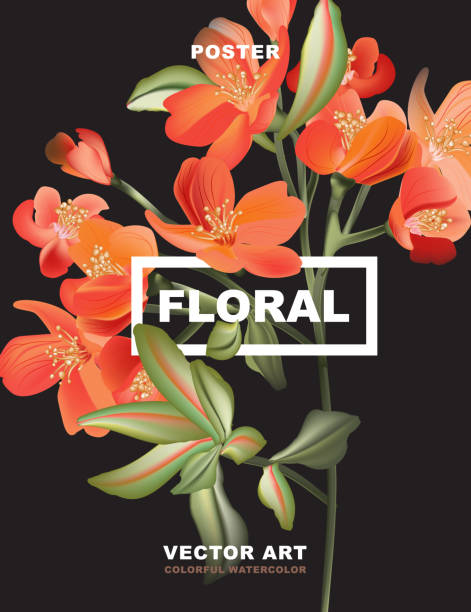 Macro astromelia flower poster, holiday greeting card, 8 March design. Orange red Flower small lily plant isolated on black. Delicate florist design realistic vector Macro astromelia flower poster, holiday greeting card, 8 March design. Orange red Flower small lily plant isolated on black. Delicate florist design realistic vector. honeysuckle stock illustrations