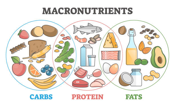 Macronutrients educational diet with carbs, protein and fats outline concept vector art illustration