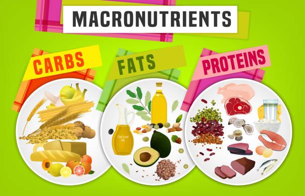ilustraciones, imágenes clip art, dibujos animados e iconos de stock de macronutrientes principales grupos de alimentos - carbohidrato