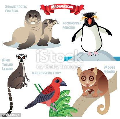 istock MADAGASCAR ANIMALS, Madagascar Fody, Subantarctic fur seal, fur seal, Rockhopper Penguin, Ring tailed lemur, mouse lemur, Lemur 1204445639