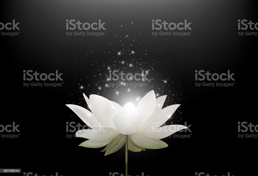 Carta Da Parati Fiori Di Loto : Magia bianco fiore di loto su sfondo nero immagini vettoriali