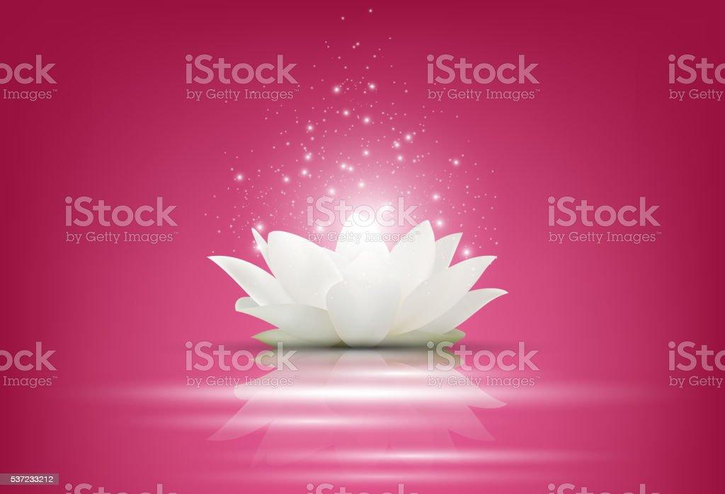 Carta Da Parati Fiori Di Loto : Magia bianco fiore di loto su sfondo rosa immagini vettoriali