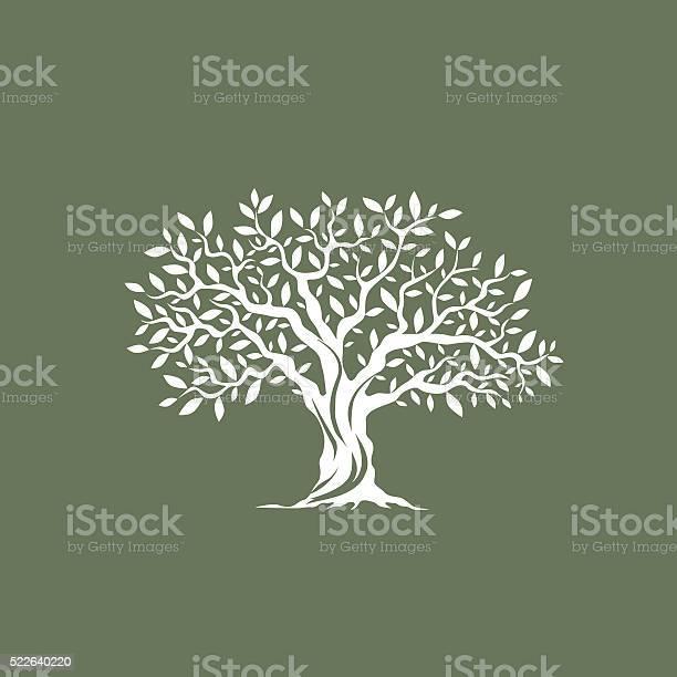 Magnificent olive tree vector id522640220?b=1&k=6&m=522640220&s=612x612&h=nmmskvzxptcechbgtgophliwo 1x0zlarltkat  hnw=