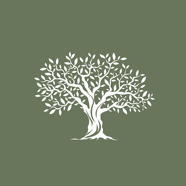 magnificent olive tree Beautiful magnificent olive tree silhouette on grey background. Infographic modern vector sign.  olives stock illustrations