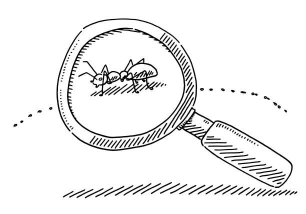 Magnifying Glass Ant Symbol Drawing vector art illustration