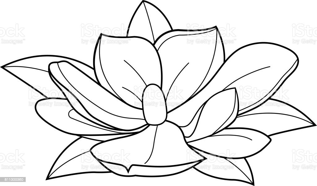 Magnolia Flower Black And White Coloring Book Page Stock Vector Art