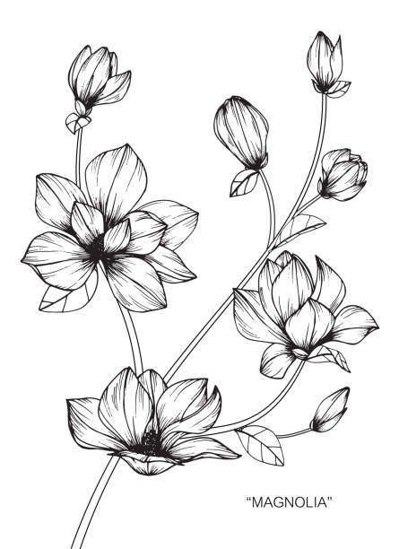 58 Magnolia Tattoo Clip Art Vector Graphics And Illustrations Istock
