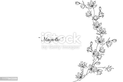 istock Magnolia flower drawings. 1177943359