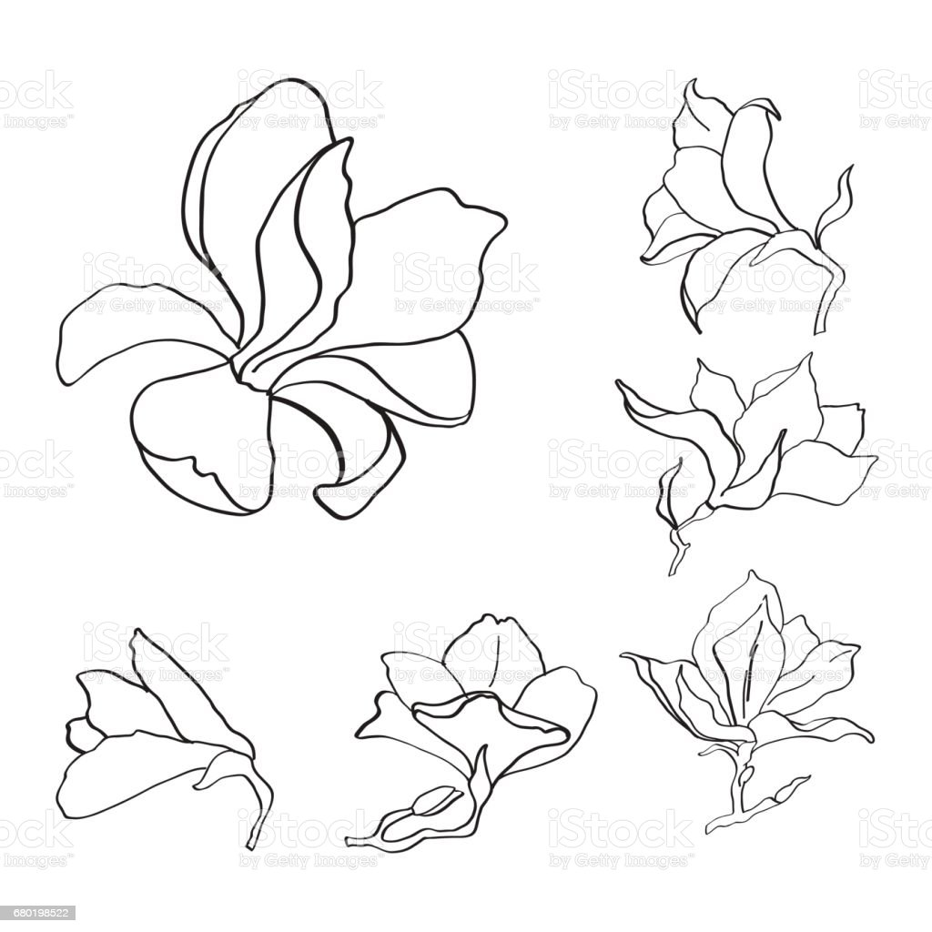 Magnolia Flower Set Outline Sketch Black And White Stock Vector Art
