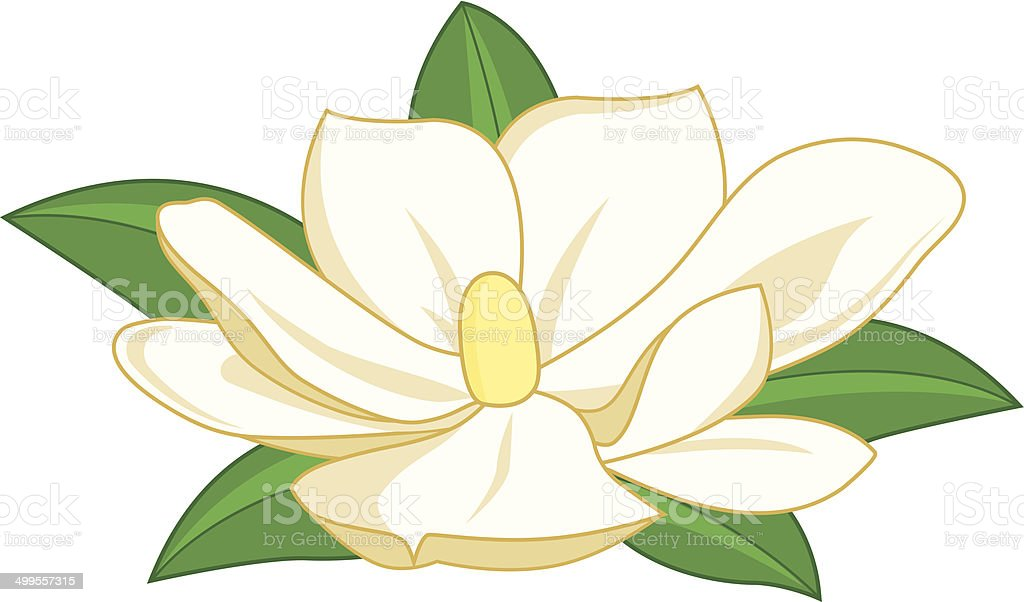 Magnolia flower vector art illustration