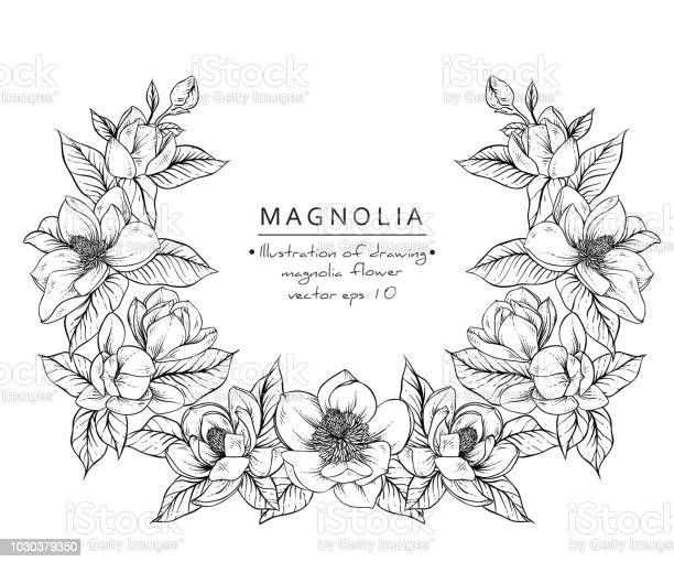 Magnolia flowers vector id1030379350?b=1&k=6&m=1030379350&s=612x612&h=h hprkxwysodua4buxjipkrmiqcvkimizluezepui3o=