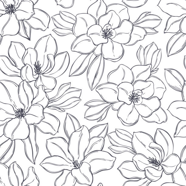 ilustrações, clipart, desenhos animados e ícones de flores magnólias. padrão vetorial. - conceitos e temas