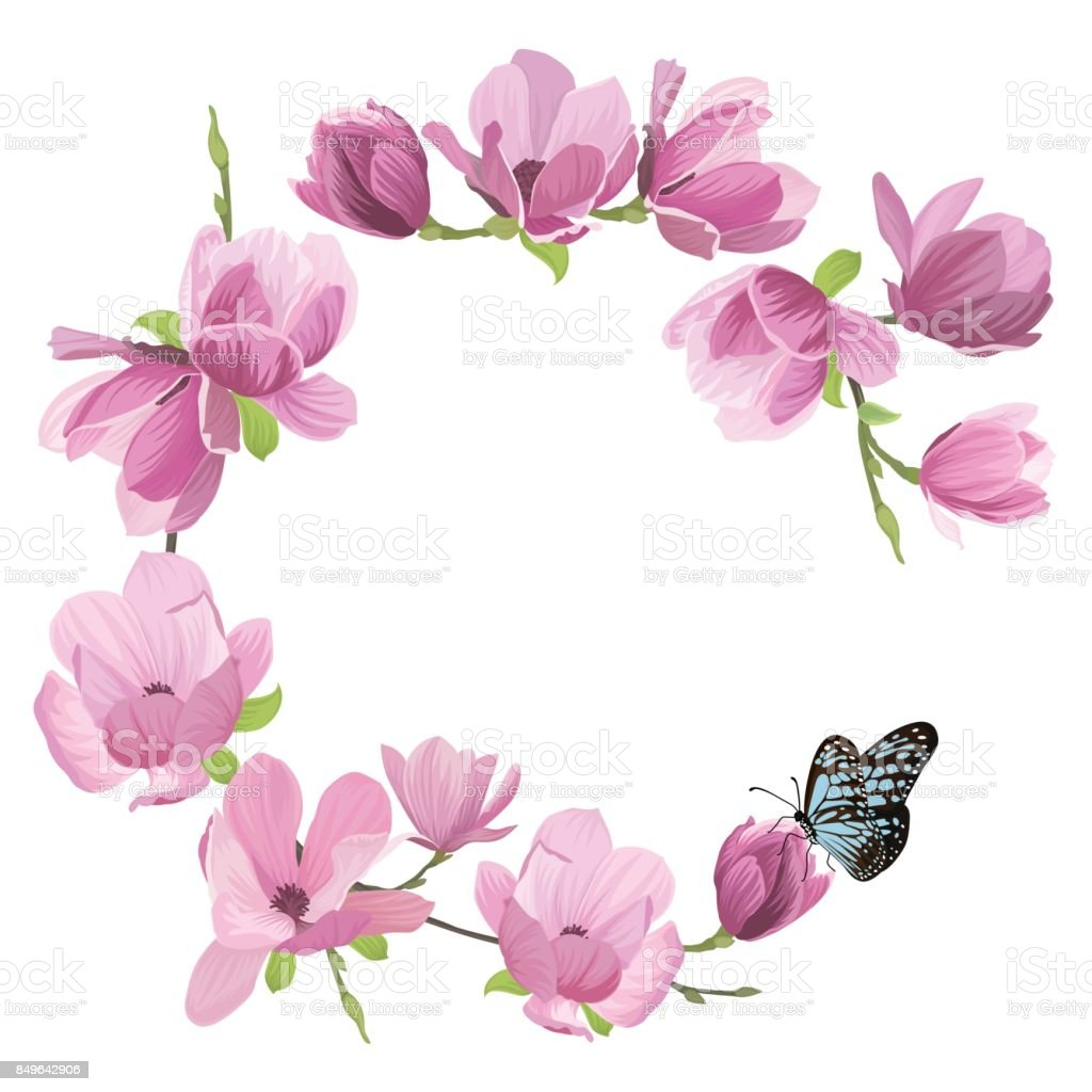 Magnolia Flowers With A Butterfly On White Background Stock Vector