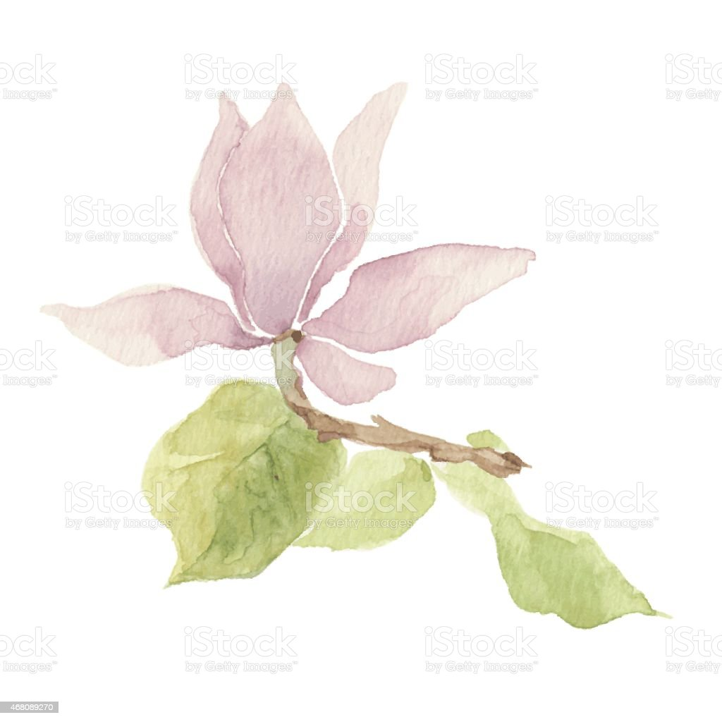 Magnolia isolated on a white background.Vector, watercolor hand drawn  illustration. vector art illustration