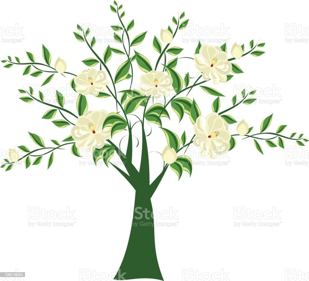 Magnolia Tree royalty-free magnolia tree stock vector art & more images of beauty in nature