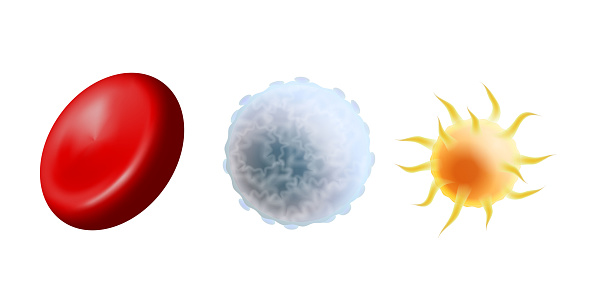Main blood cells in scale - erythrocyte, thrombocyte and leukocyte. Red blood cell, white blood cell and platelet