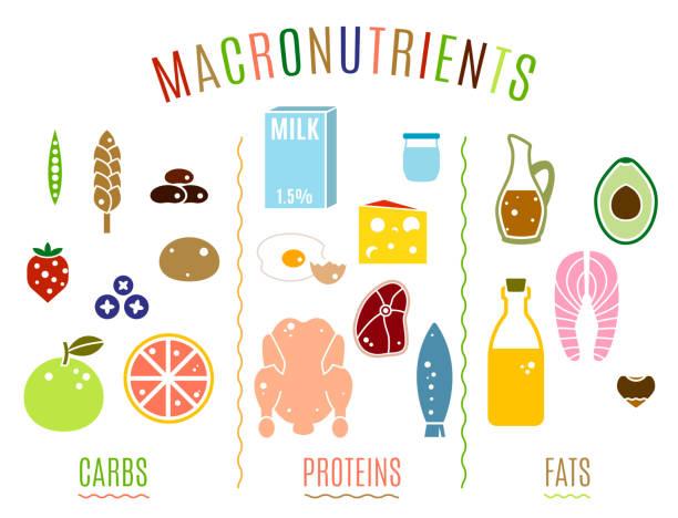 ilustraciones, imágenes clip art, dibujos animados e iconos de stock de grupos de alimentos principales - carbohidrato