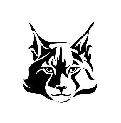 maine coon cat black and white vector head outline