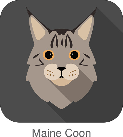Maine Coon, Cat breed face cartoon flat icon design