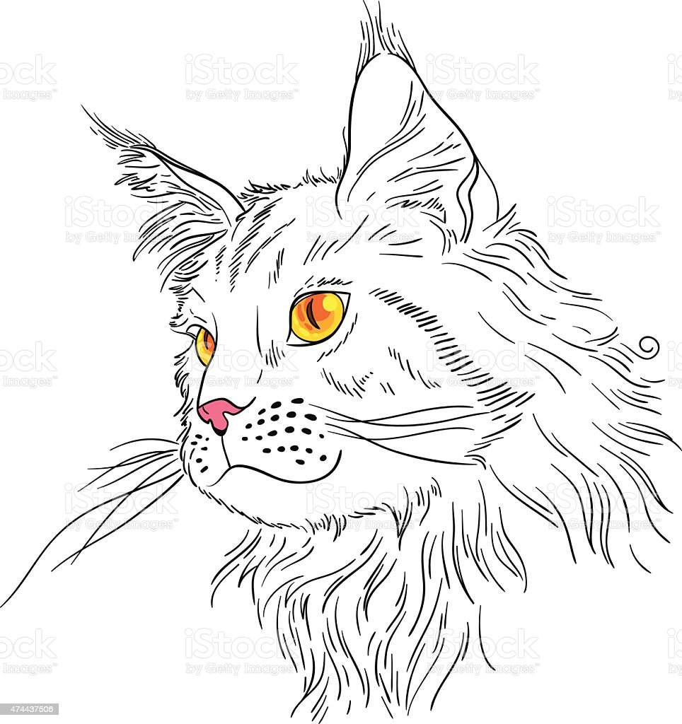 Maine coon vector art illustration