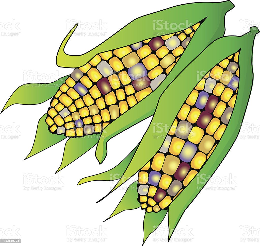 Maize royalty-free stock vector art