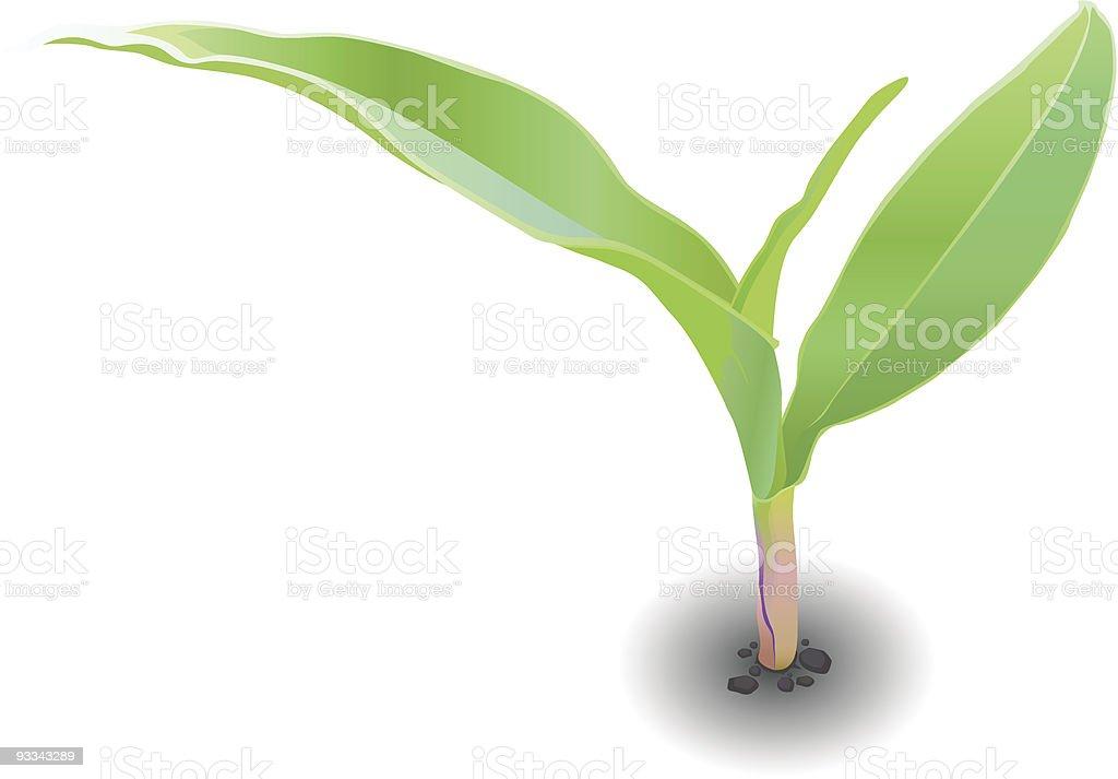 maize royalty-free stock vector art