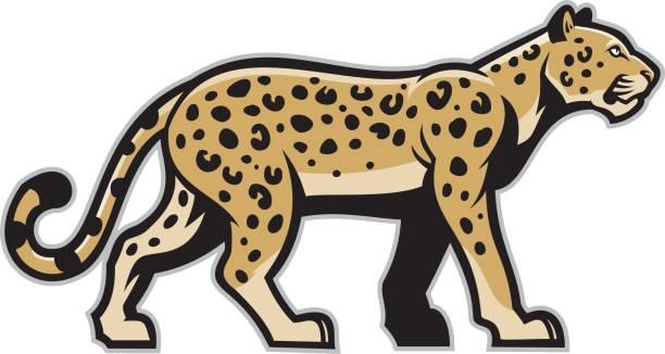 majestic leopard mascot - jaguar stock illustrations