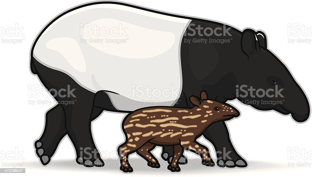Malaysian Tapirs royalty-free stock vector art
