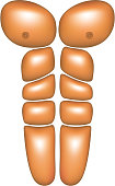 Male abdominal muscles