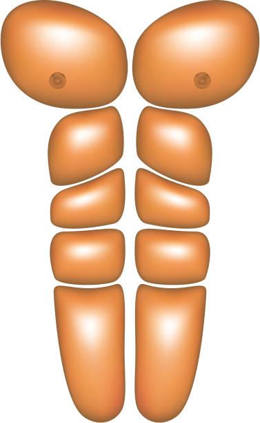 Male abdominal muscles vector art illustration