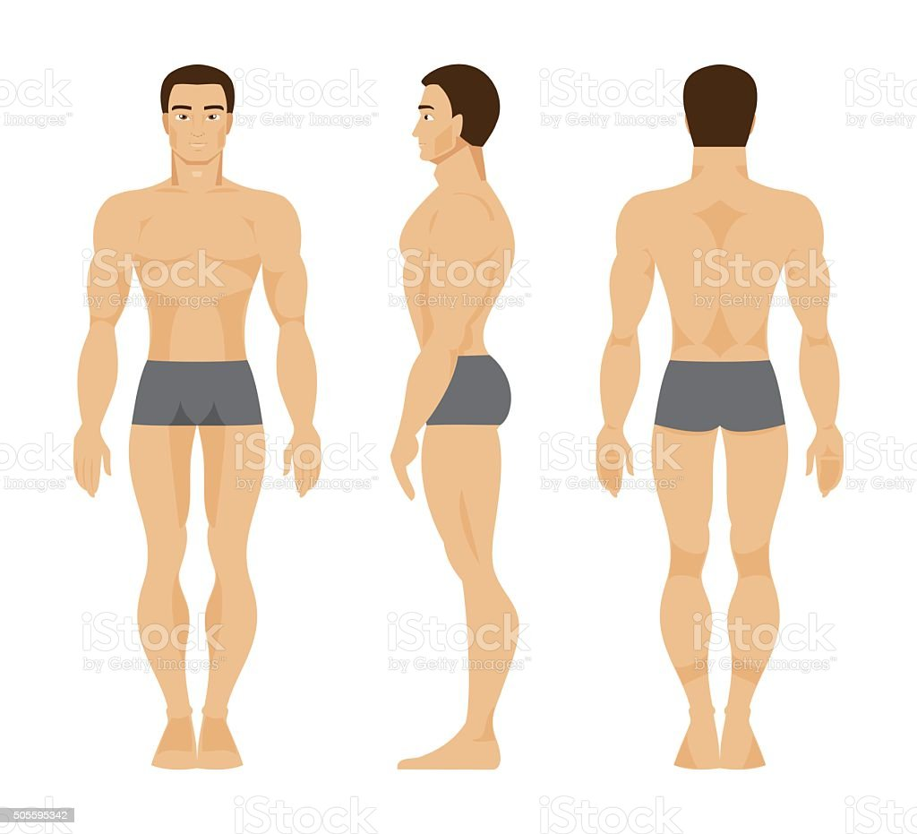 Male Anatomy Vector Illustration Stock Vector Art & More Images of ...