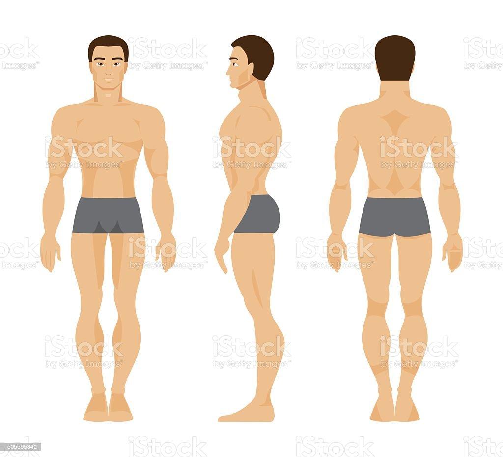 Ilustración de Hombre Anatomía Humana Ilustración Vectorial y más ...