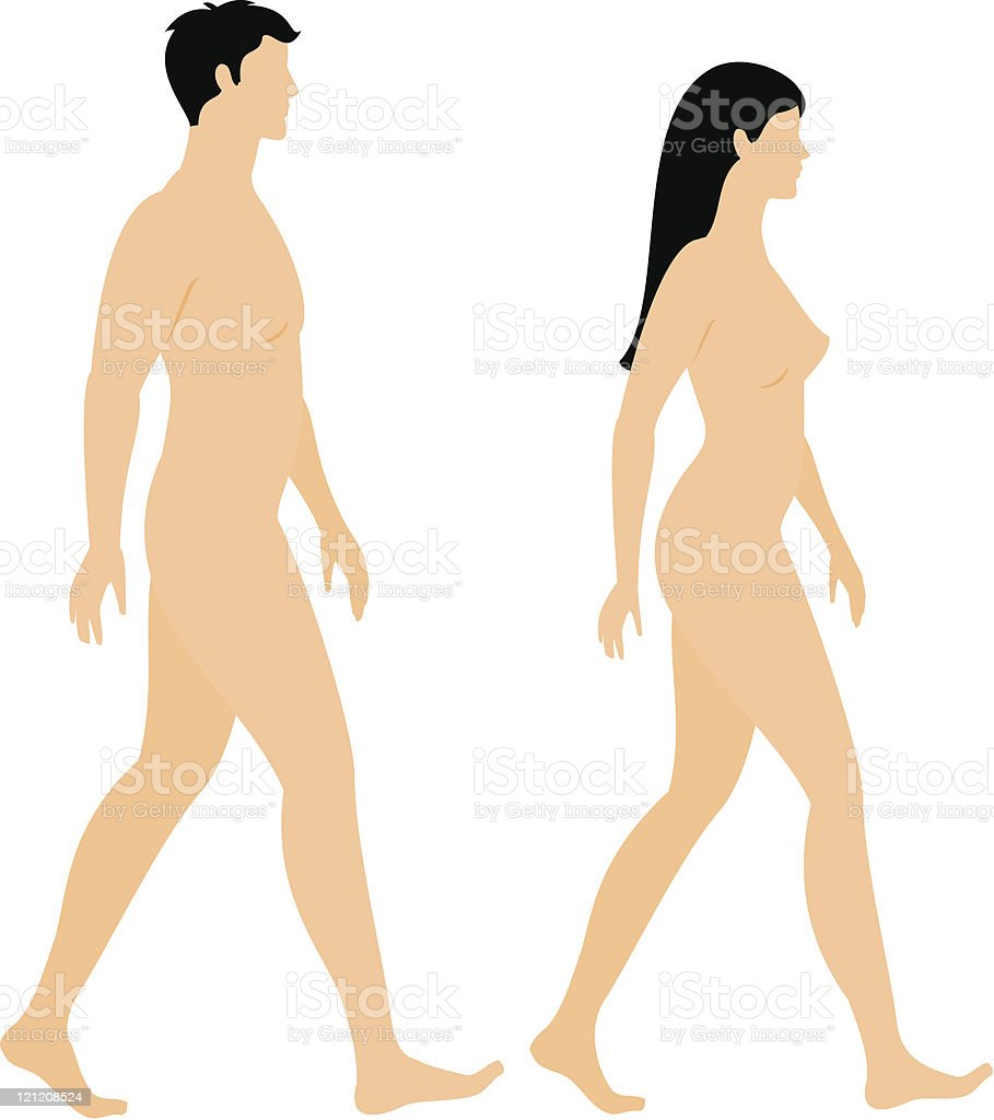 Male and female bodies royalty-free stock vector art