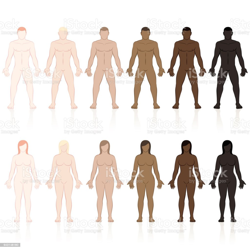 Male and female bodies with different skin types. Very fair, fair, medium, olive, brown and black. Isolated vector illustration on white background. vector art illustration