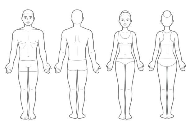 męski i żeński wykres ciała - plecy stock illustrations