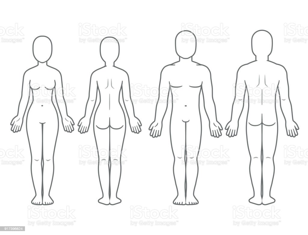 Männliche Und Weibliche Körper Vorne Und Hinten Stock Vektor Art und ...