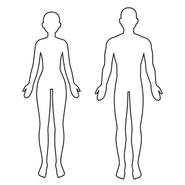 illustrazioni stock, clip art, cartoni animati e icone di tendenza di contorno del corpo maschile e femminile - il corpo umano