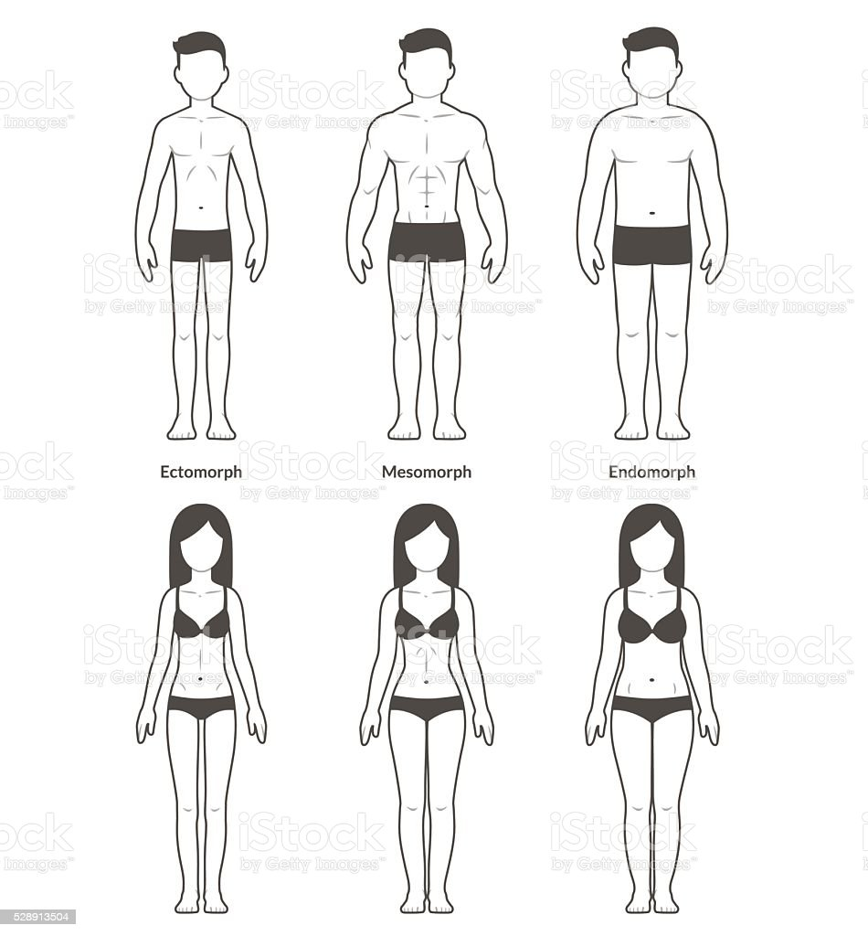 Männliche Und Weibliche Körperformen Stock Vektor Art und mehr ...