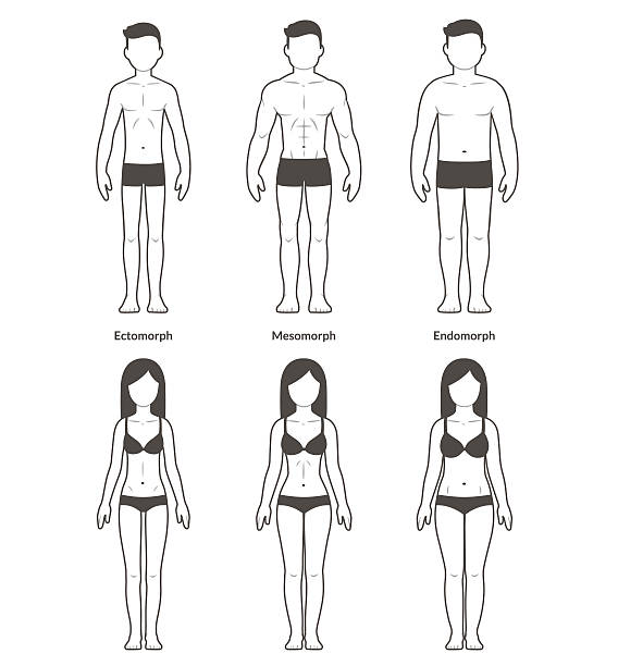 Male and female body types vector art illustration