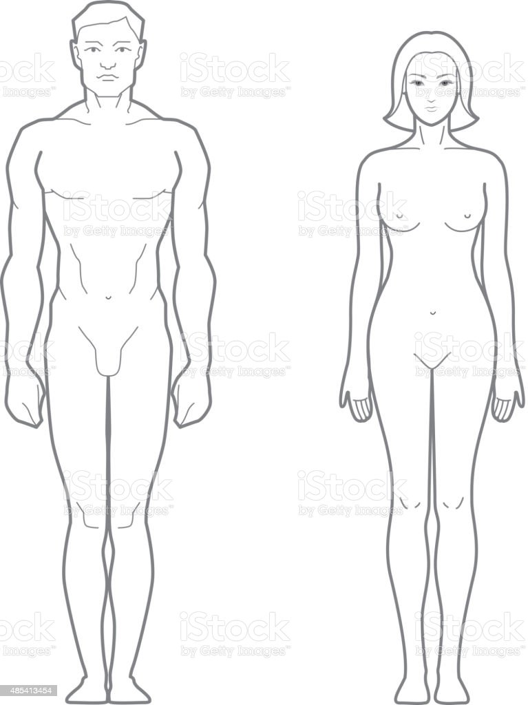 Male And Female Body Stock Vector Art & More Images of Anatomy ...