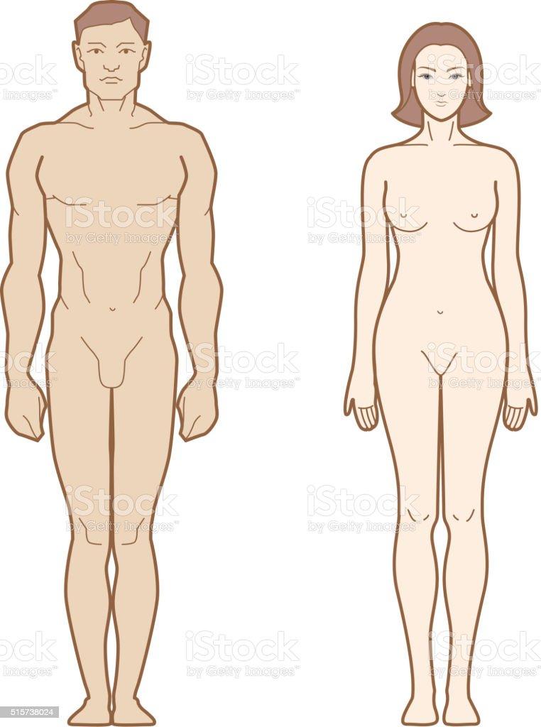 Männliche Und Weibliche Körper Stock Vektor Art und mehr Bilder von ...