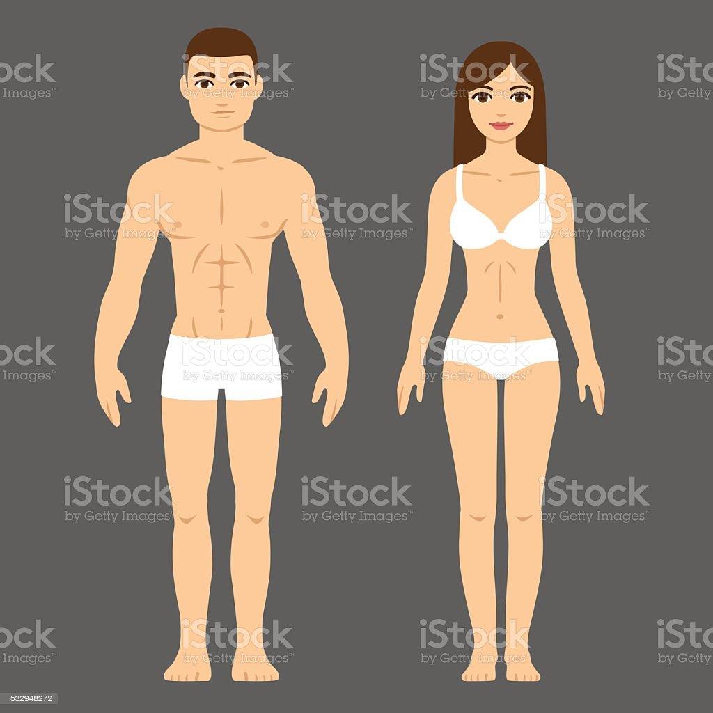 Male and female body vector art illustration