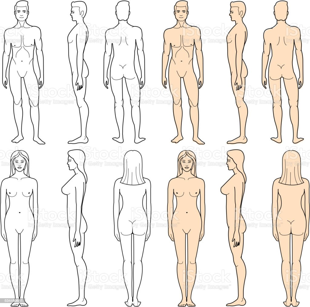 Male And Female Body Stock Vector Art More Images Of Anatomy