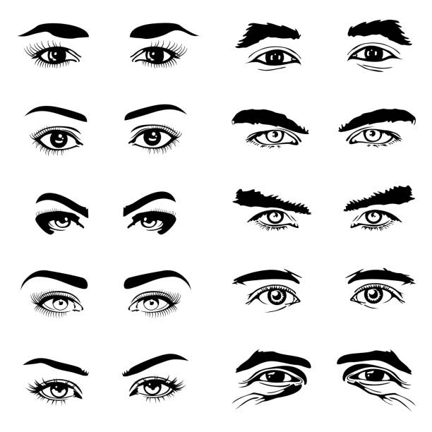 Male and female eyes eyebrows vector elements – Vektorgrafik
