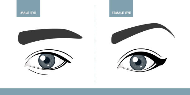 Male and Female eyes. Vector illustration. Template for Makeup or ophthalmology vector art illustration